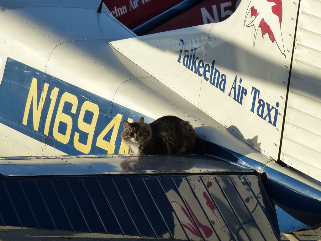 A cat basks in the morning sun on the tail of a plane