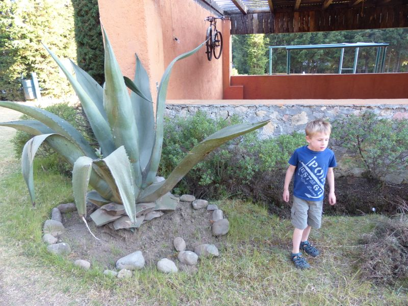 These giant succulent plants are everywhere. We thought they'd make a great start to a bad horror film. Watch out Quinn!!