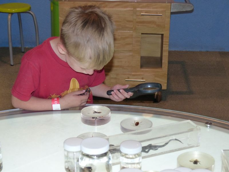 Looking at bugs through a magnifying glass was fun for a few minutes.