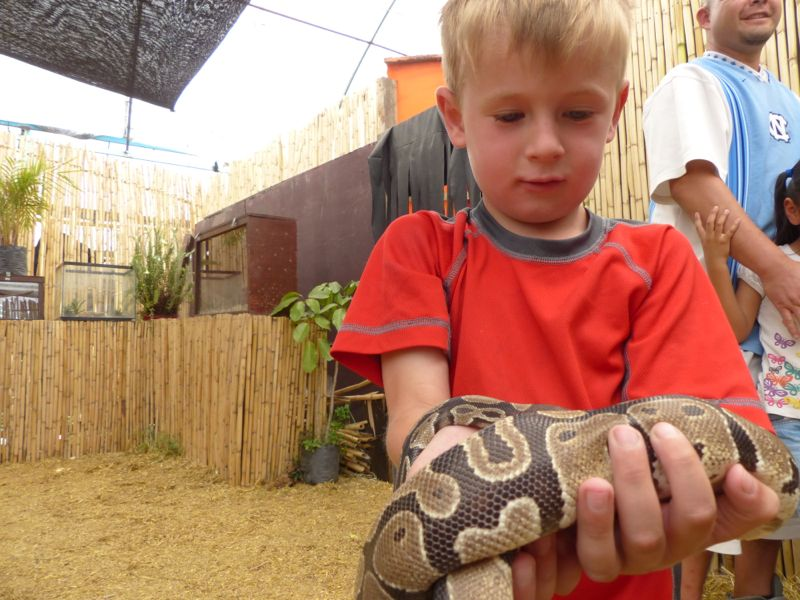 We visited a small zoo that housed some cool snakes, salamanders, and turtles.