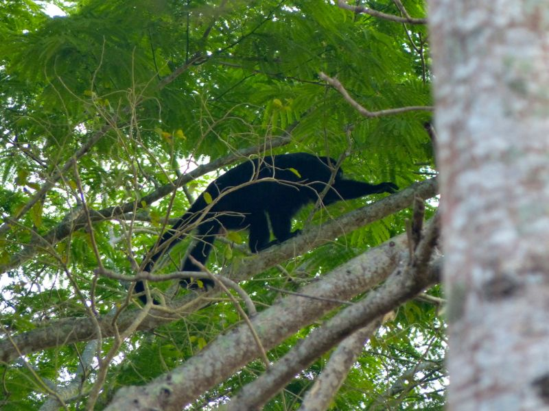 We got to see more howler monkeys at our campsite there, but it was really hot and the sandflies came out at dusk forcing us into the hot van. We passed a frozen bottle of water back and forth to try to cool our skin down.