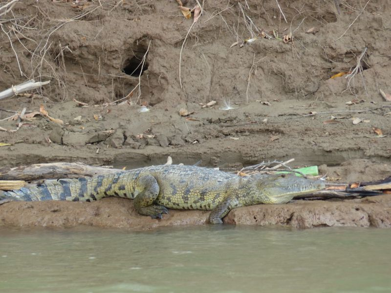 We even got to see a crocodile from the boat on the way back!