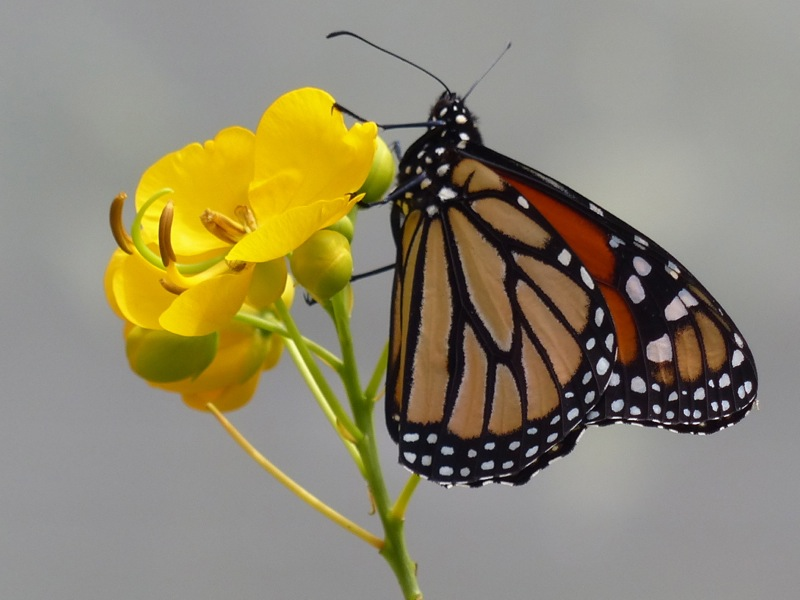 There's a nice nature reserve close to our campground, and they have a small butterfly enclosure.