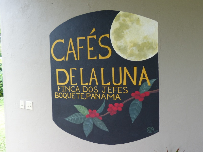 Coffee is huge here. The valleys around town are covered with fincas (ranches). We toured one last week and learned a little about growing coffee.