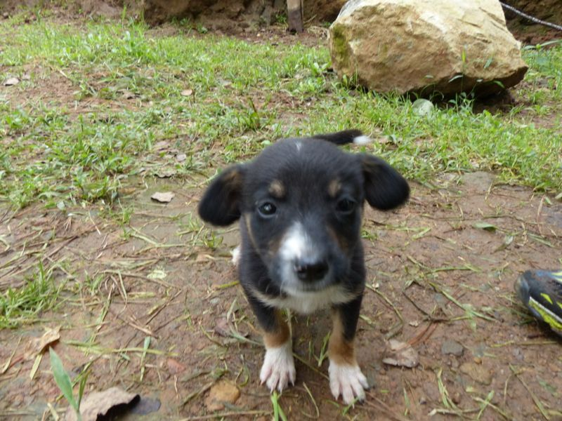 More fun than the hike was this tiny little puppy that the caretaker had!