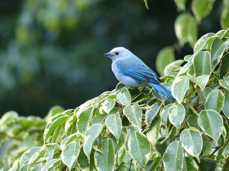 And our favorite blue birds are still hanging out around the house!