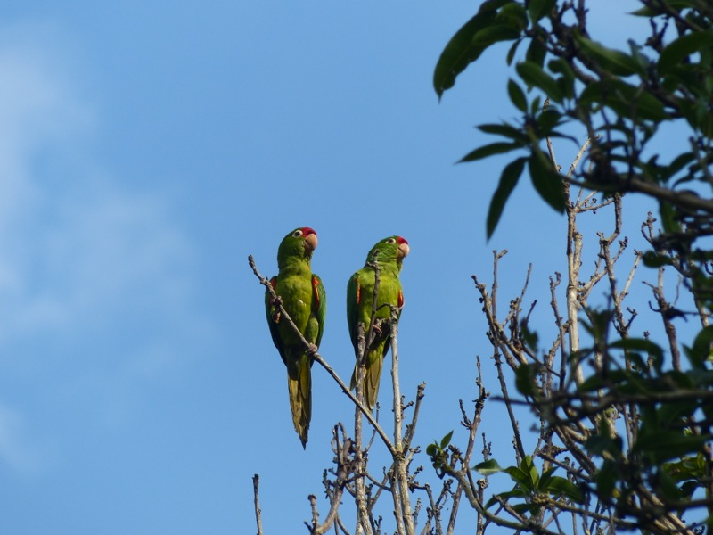 We were visited by a pair of raucous parrots.