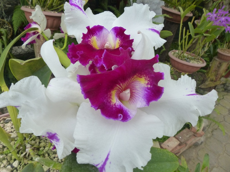 We stopped by a botanic garden on our way to Alajuela. It's famous for it's orchids.