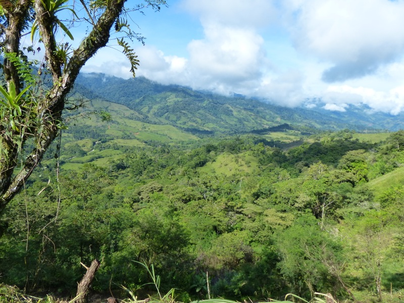 The central highlands of Eastern Costa Rica and Western Panama are full of lush greenery and home to lots of coffee farms. A few hours after this photo was taken we were driving through a downpour!
