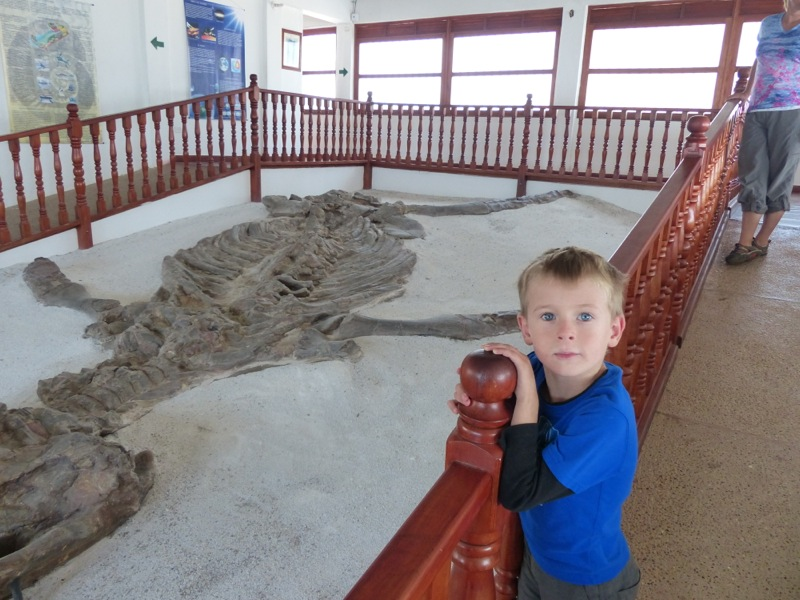 We visited two paleontological museums including this one with a nearly complete skeleton of a giant sea-fairing dinosaur called a kronosaurus, still in the position where it was discovered in 1977.