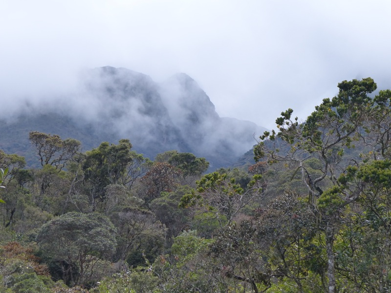 I tried to go for a hike in the nearby Iguaque national park, but eventually got tired of sloshing around in the rain and turned back.