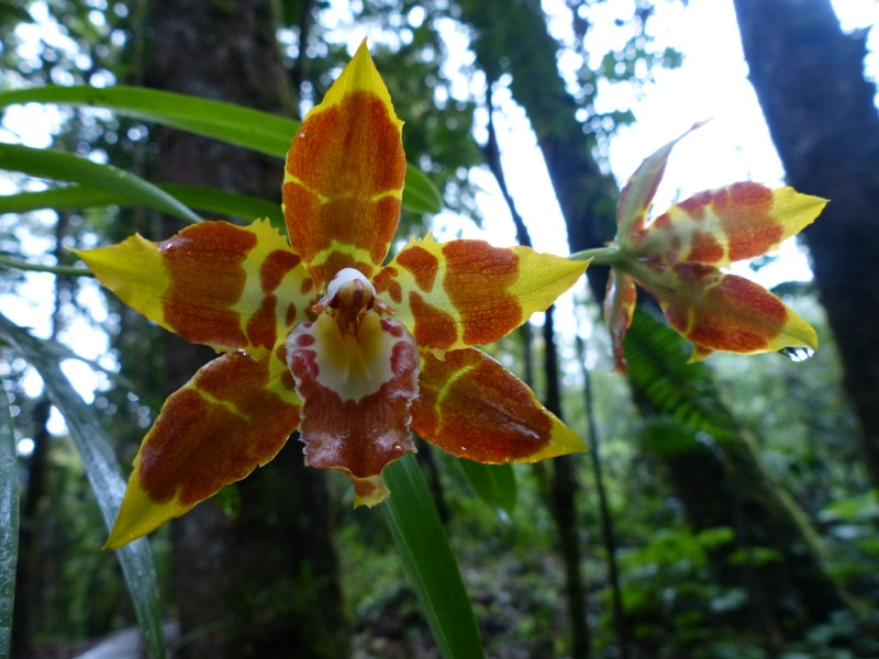 We got to see a handful of the thousands of species orchids in Colombia.