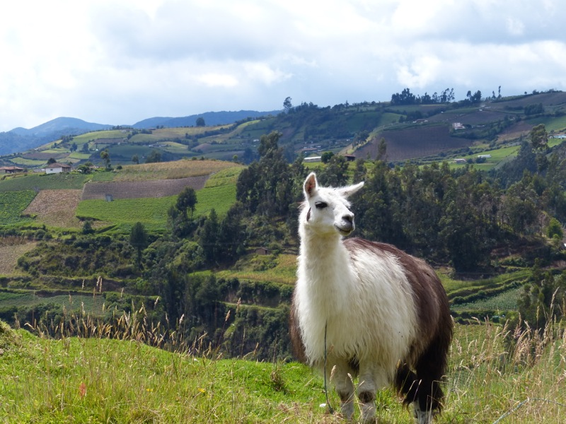 And this llama agreed to pose for us