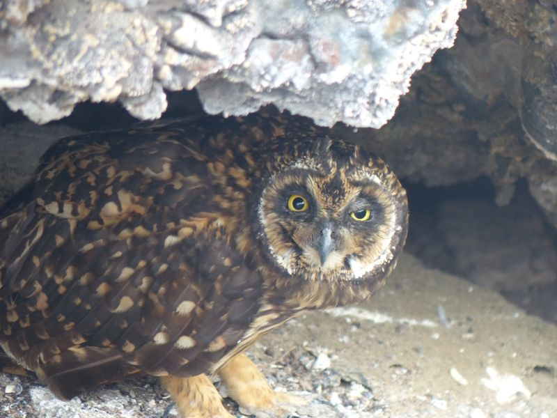 This owl was peering out at us from a cave on one of our hikes.