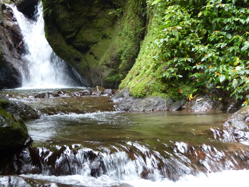 We went for a hike in the cloud forest and visited a series of waterfalls.