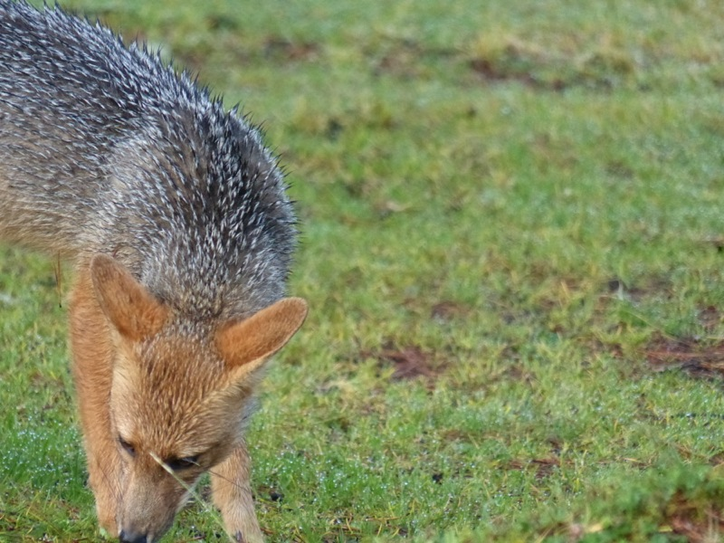 We saw some interesting birds, and a fox visited our camp.