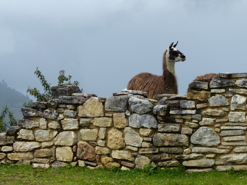 Every Peruvian ruin needs a llama wandering around in it to add authenticity.