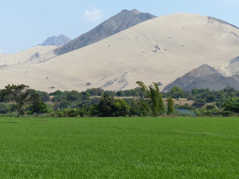 The drive down to Trujillo led us from the lush green highlands to a desert coastline. Here rice paddies fed from a river contrast with giant dunes.