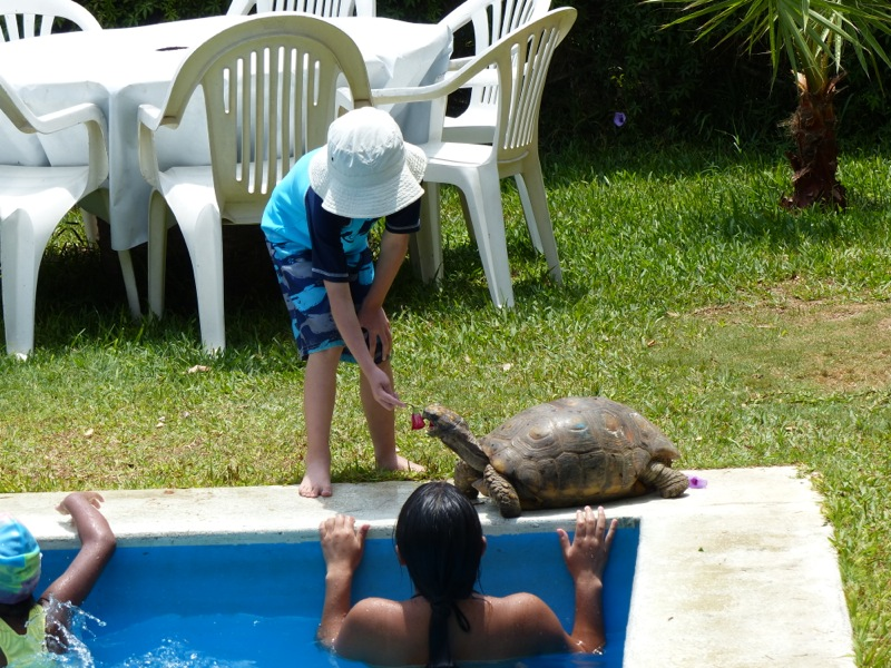 Our campground featured a pool as well as pet turtles.