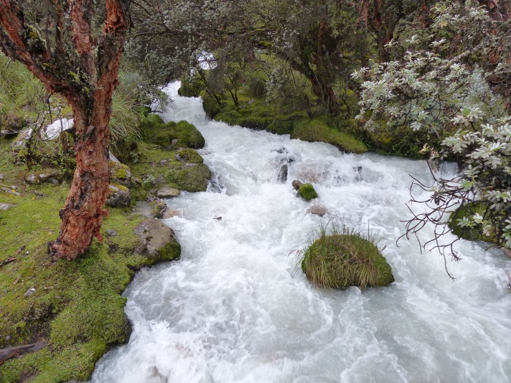 The creeks were swollen with the runoff from the rains.