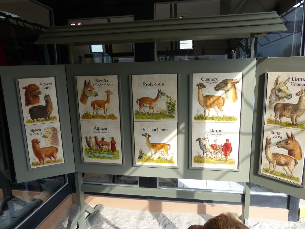We visited a small zoo that had various members of the Alpaca family. Here's the definitive guide.