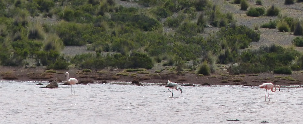 ... and even pink flamingos.