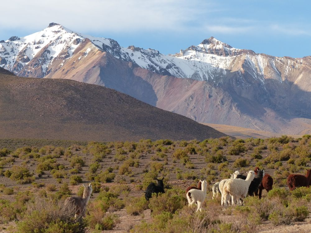 Alpacas and snow capped peaks. Can it get more Andean?