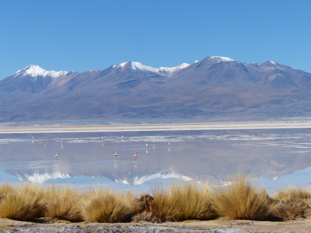 We passed many lakes and salt flats on our way into Chile the next day. This one even featured flamingos.