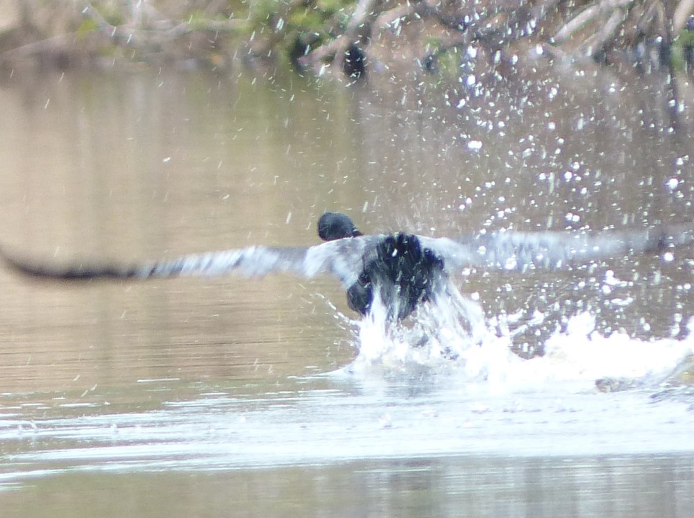 A cormorant takes flight as the boat approaches.