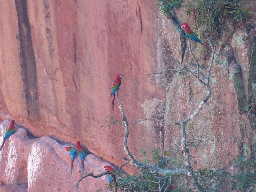 We visited a sinkhole very similar to one we saw in Mexico. This one was home to beautiful macaws