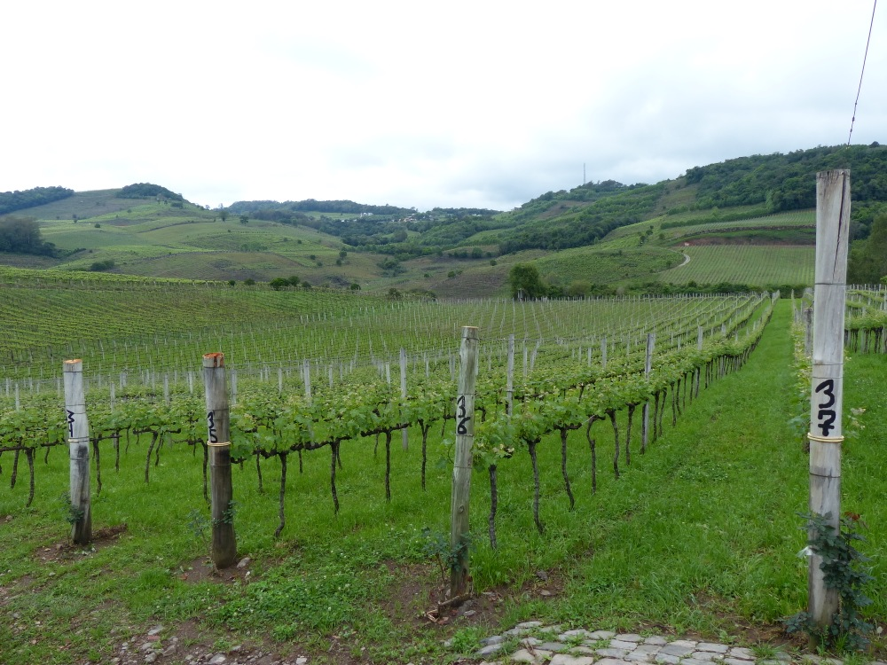 The grape orchards of southern Brazil. The owners of this vineyard generously allowed us to camp in their parking lot, so of course we had to buy some wine from them.