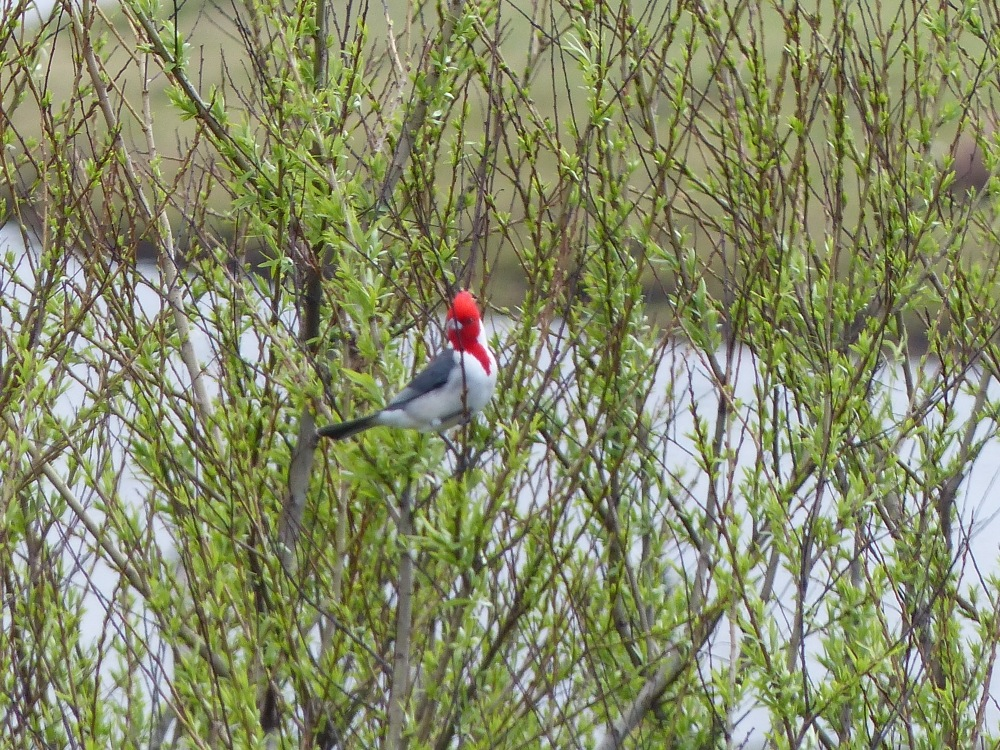 On the way south toward Uruguay, we passed through a large wetland area. The drive unexpectedly turned into a great bird and wildlife watching opportunity.
