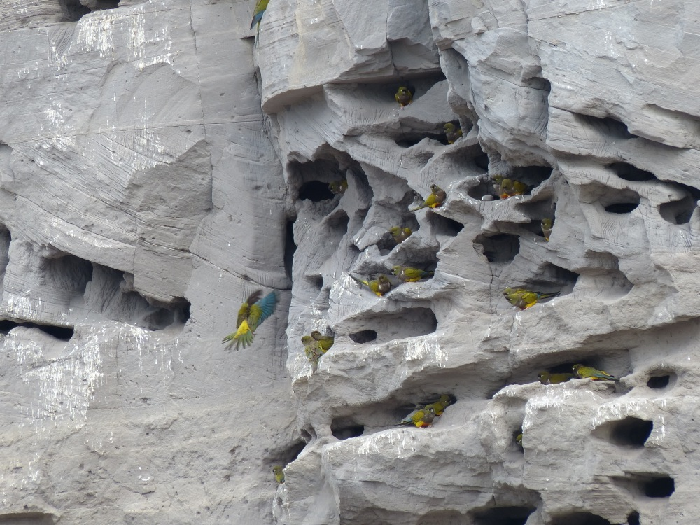 One of the stops on our way south was to see a set of cliffs that is home to the world's largest colony of burrowing parrots. Who knew there was such a thing as a burrowing parrot?