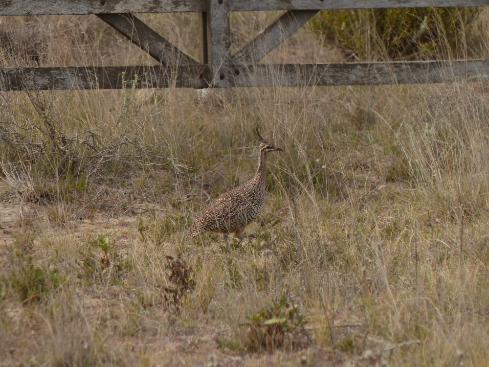 We saw lots of these little guys running down the roads in front of us. We started calling them roadrunners. meep-meep!
