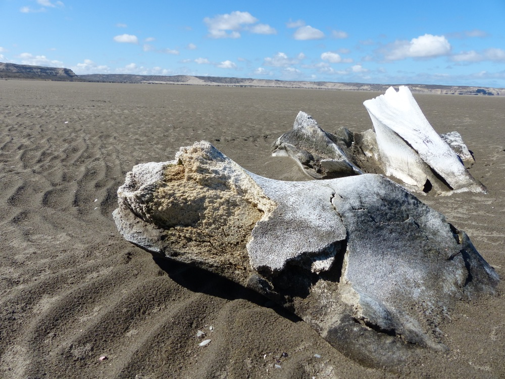 I found some whale bones on the beach during a walk one day.
