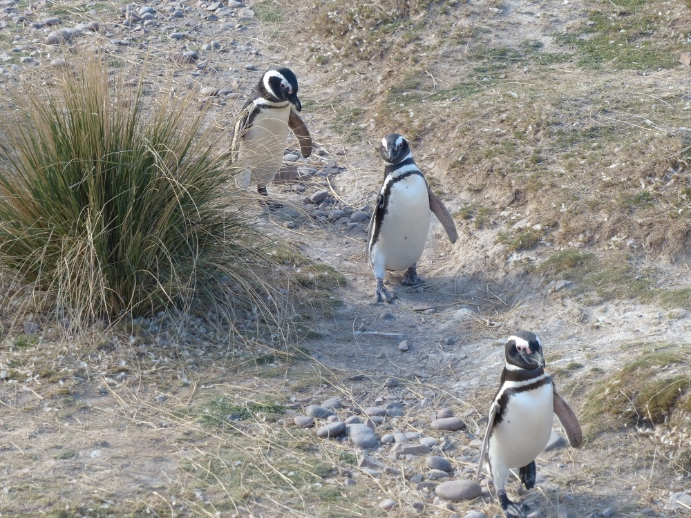 We took a side trip to another national park to see orcas and penguins. We didn't see any orcas, but the penguins were in abundance.