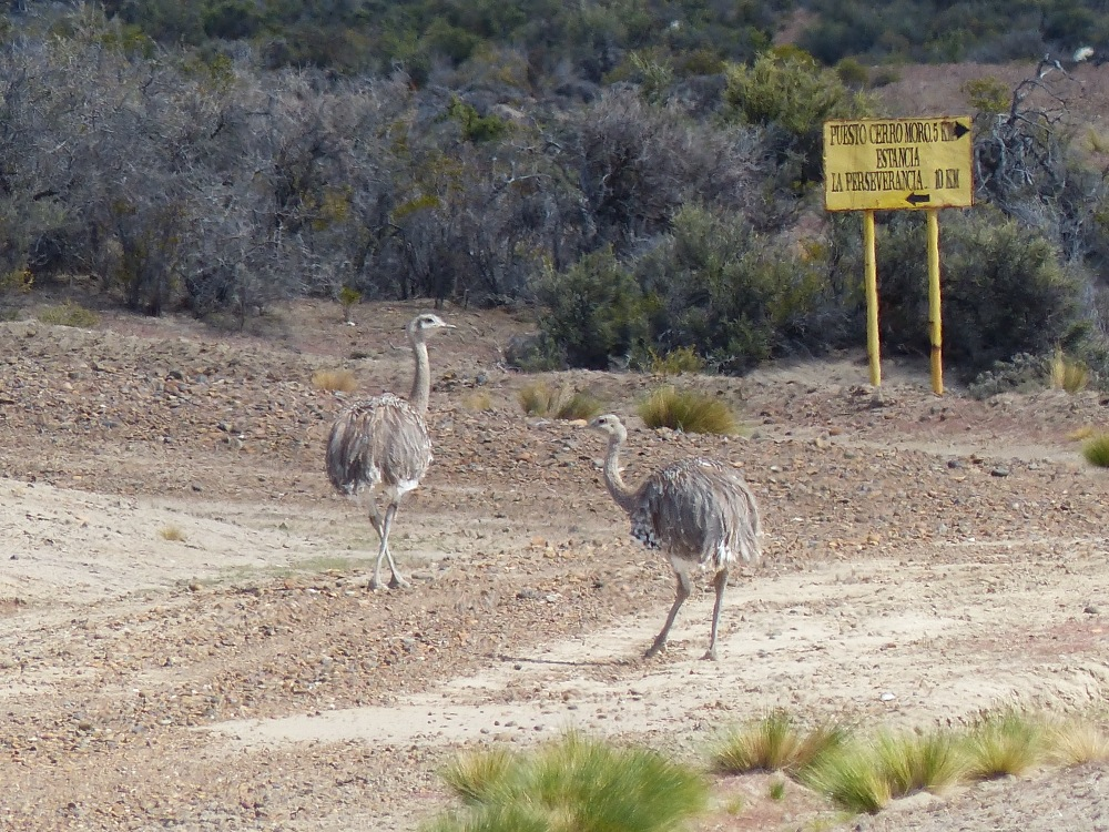 We also saw some cool ostrich-like birds called ñandús. They were at least as fast as the rabbits, and smart enough to leave the road.